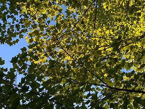 Trees Mad's iPhone 2019-11 0116 trees.jp
