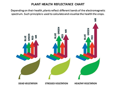 Plant Health Reflectance Diagram.png