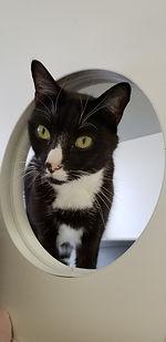 catinporthole.jpg