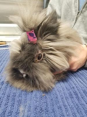 bunnygroom.jpg