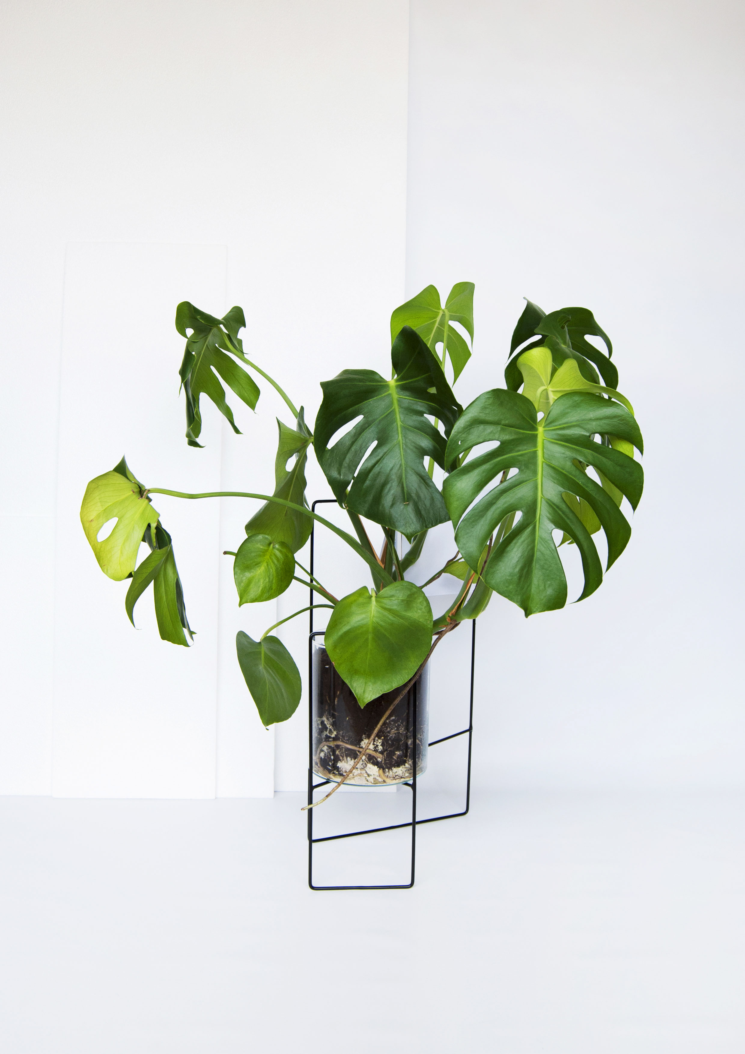 April plant stand