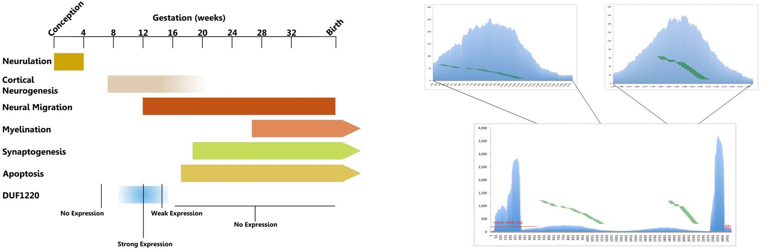 Data Viz Examples