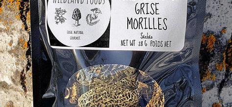 Grey Morels