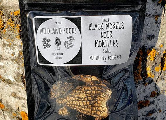 Black Morels