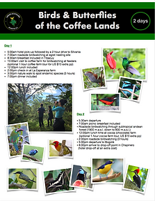 Birds and butterflies of the coffee land