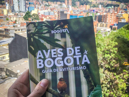The new Bogotá birdwatching guide will show you why this is the best city in the world for birding!