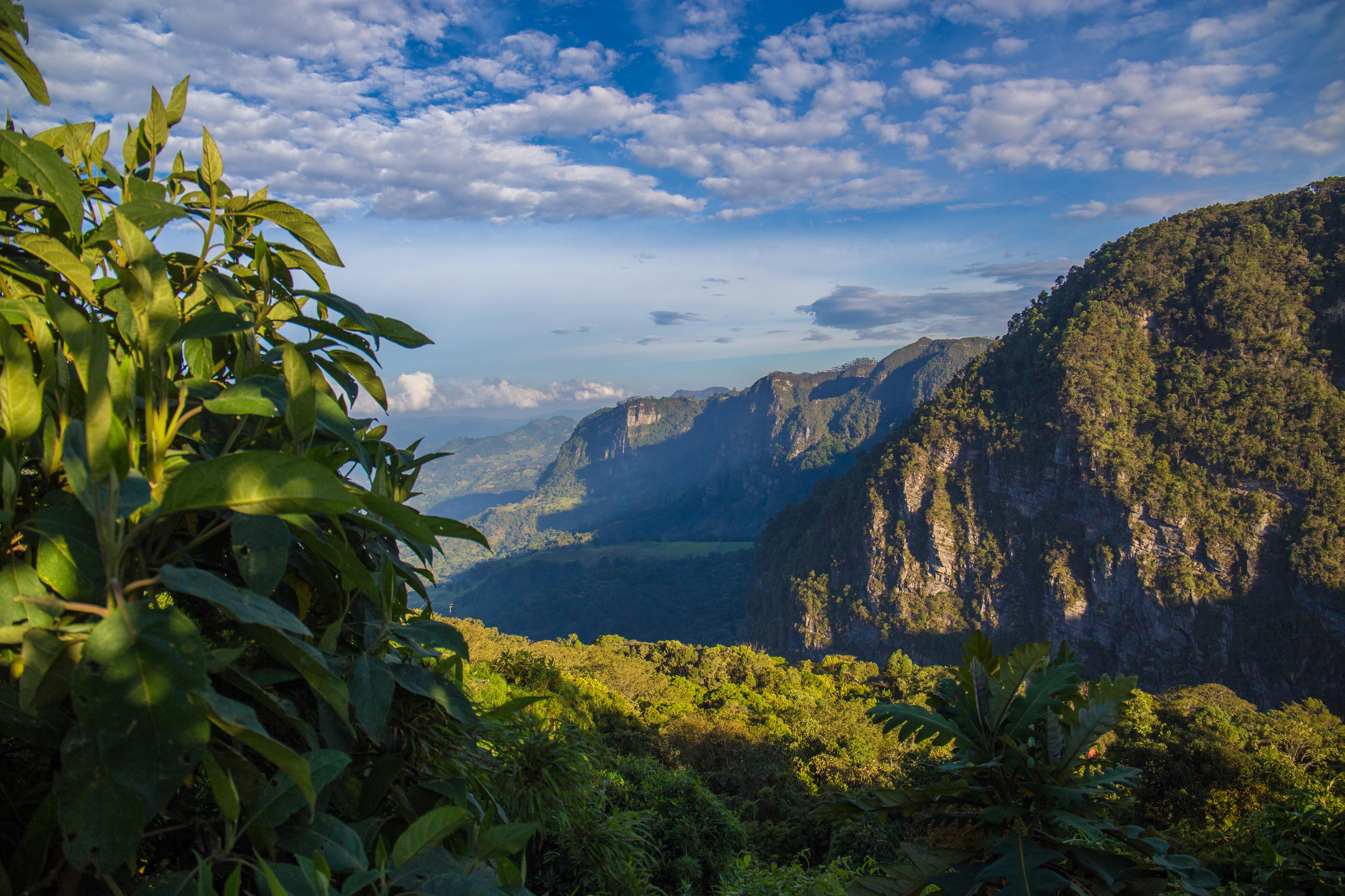 Cloud Forest Bogota