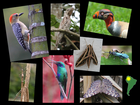 Colombia: home of biodiversity