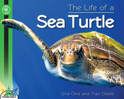 The life of a sea turtle