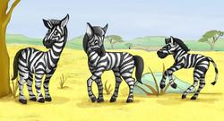 zebra-color1