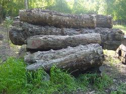Mesquite, logs2059.jpg