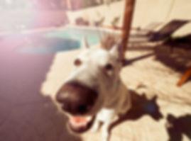 Dog Close Up