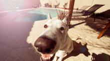 לכלבכם מבט מדליק