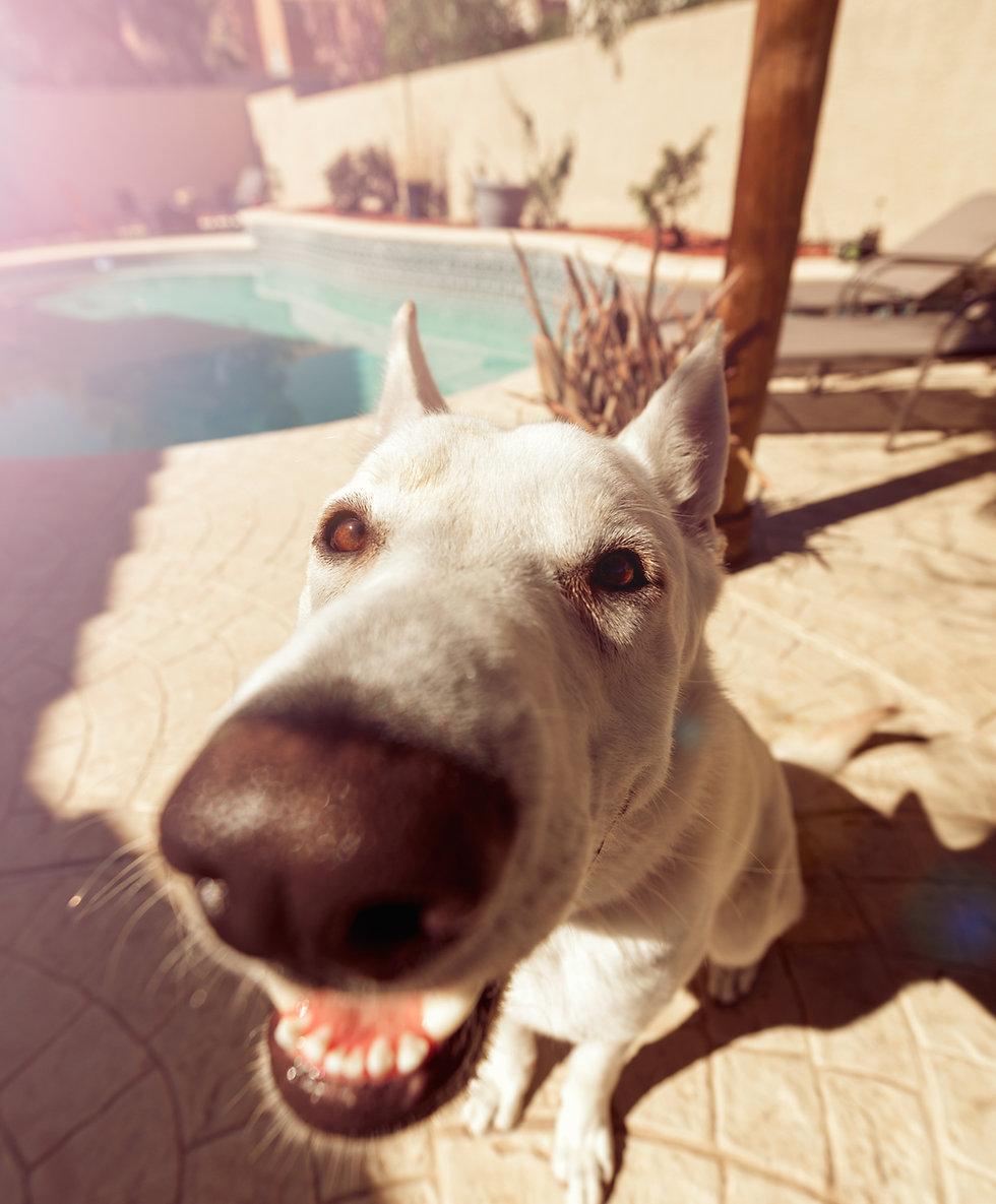 RescataMe org Punta Cana-non profit Animal Rescue Group-Spay