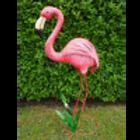 Dutch Imports Flamingo