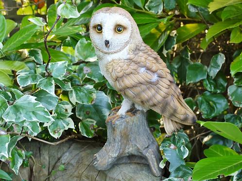 Dutch imports Owl