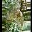 Thumbnail: Dutch Imports Hanging Cat