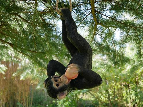 Dutch Imports Climbing Monkey