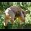 Thumbnail: Dutch Imports Hanging Pig