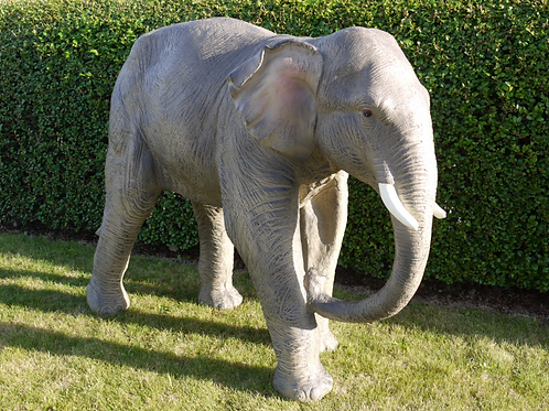 Dutch Imports Elephant