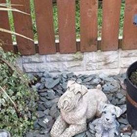 Stone  Schnauzer Dog