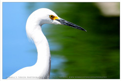 Bird+PIC_9331.jpg