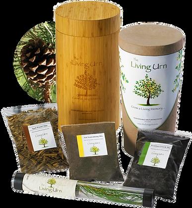 L'urne de vie - avec une bouture de pin blanc - *Rabais Fadoq -10%