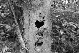Graver dans le bois