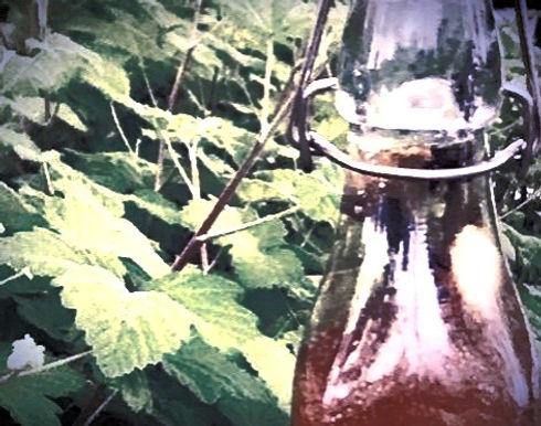 Curley #Kombucha #MadeInManchester #oldtrafford #comingsoon #functionalbeverages #functionalfood #fu