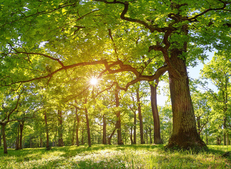 Advice from a Tree - For Professional Beauty Salons