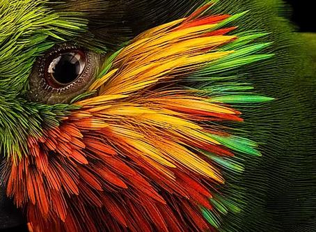 Insight #166 - BIRDS