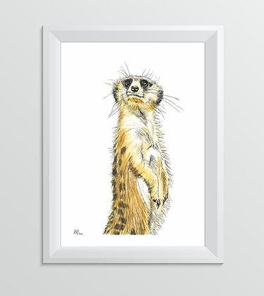 'Milo the Meerkat'
