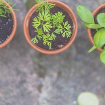 Seedlings in Pots _edited.jpg