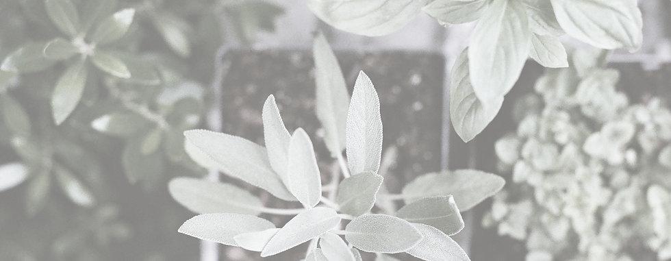Herb Plants_edited.jpg