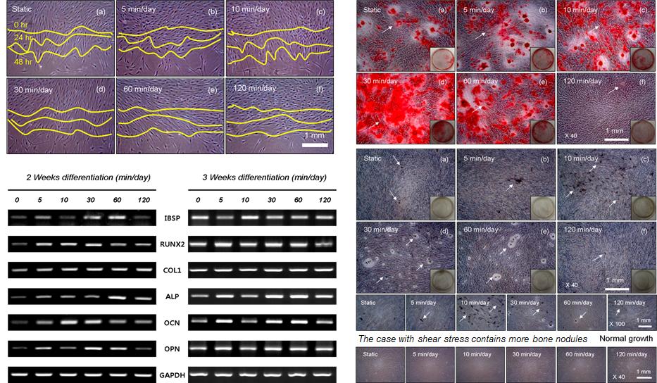 Data Analysis of Stem Cells