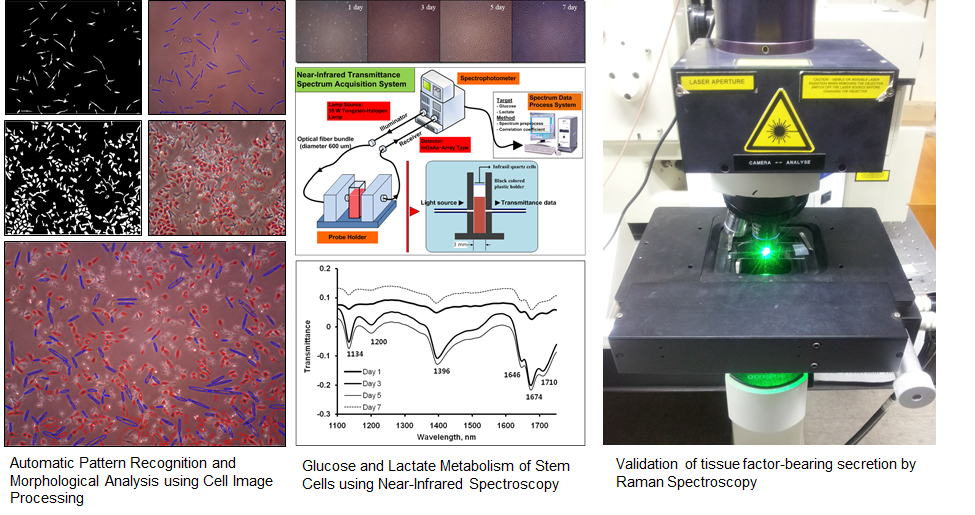Noninvasive measurement of stem cell