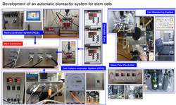 Automated bioreactor for stem cells