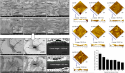 FE-SEM images of MSCs