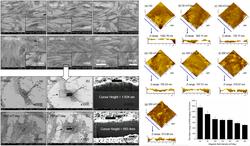 FE-SEM images of MSCs