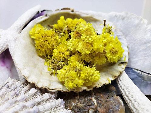 Helichrysum Flowers