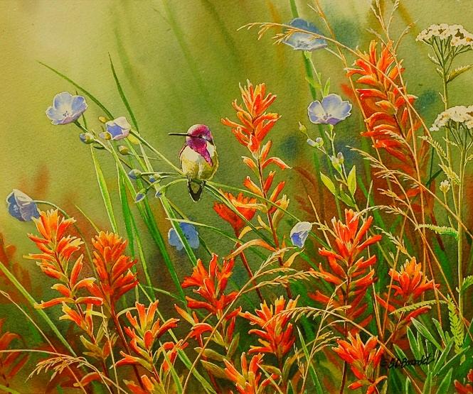 Costas and Wildflowers WEB