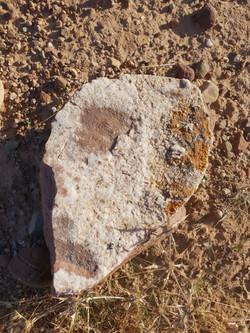 Nkhila Camp Desert Walk (8)