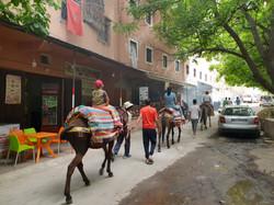 Dar Assarou - Mule Trek (3)