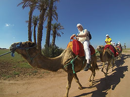 Camel ride Agafay Desert