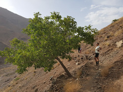 Mizane Valley Walk from Dar Assarou (5).