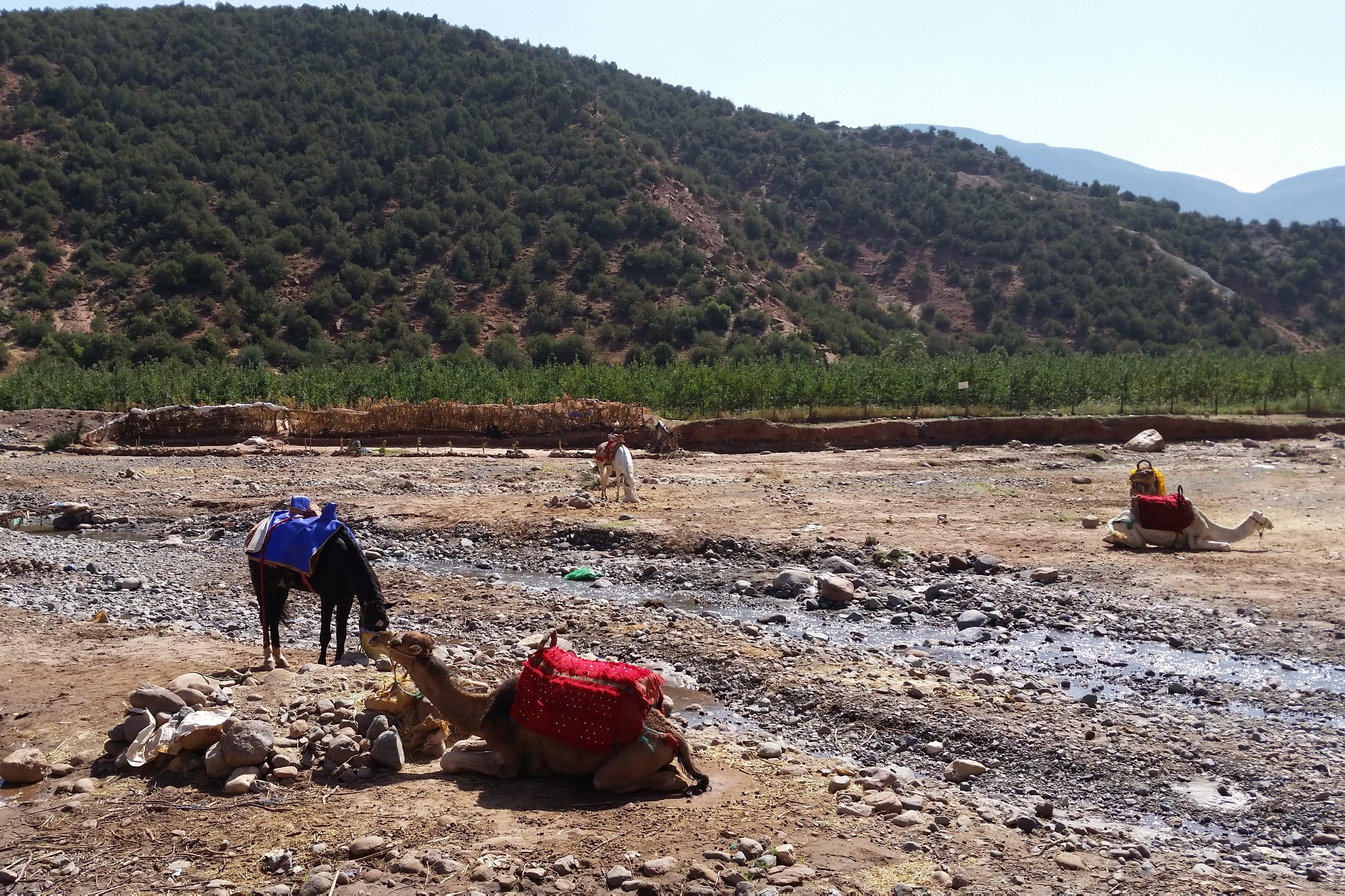 Atlas Camel Trail (4)