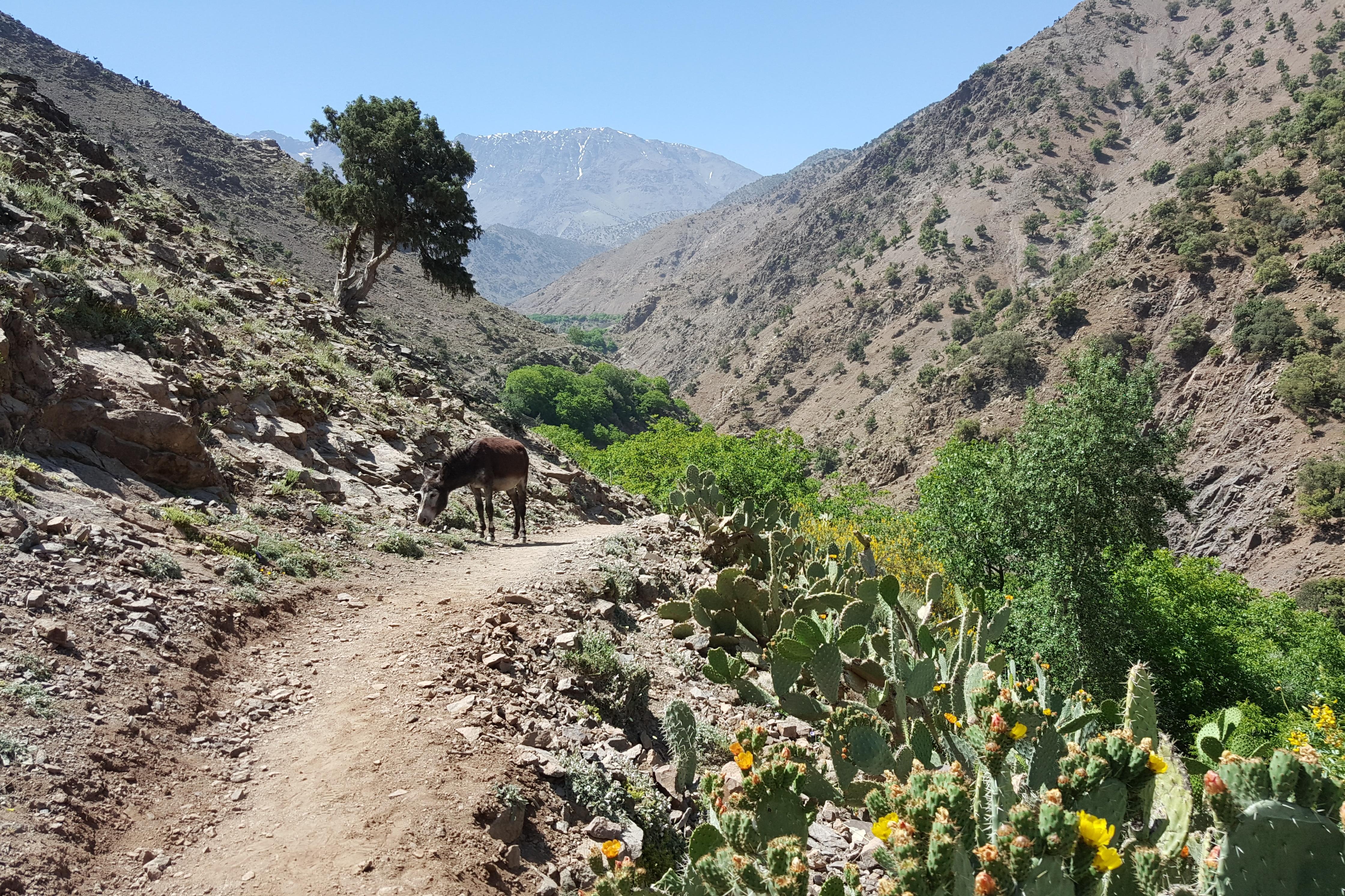 Azzaden Valley Trek (5)