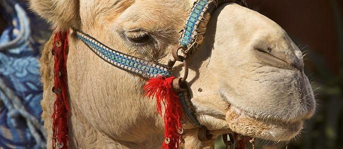 Riad Africa Honeymoon Marrakech