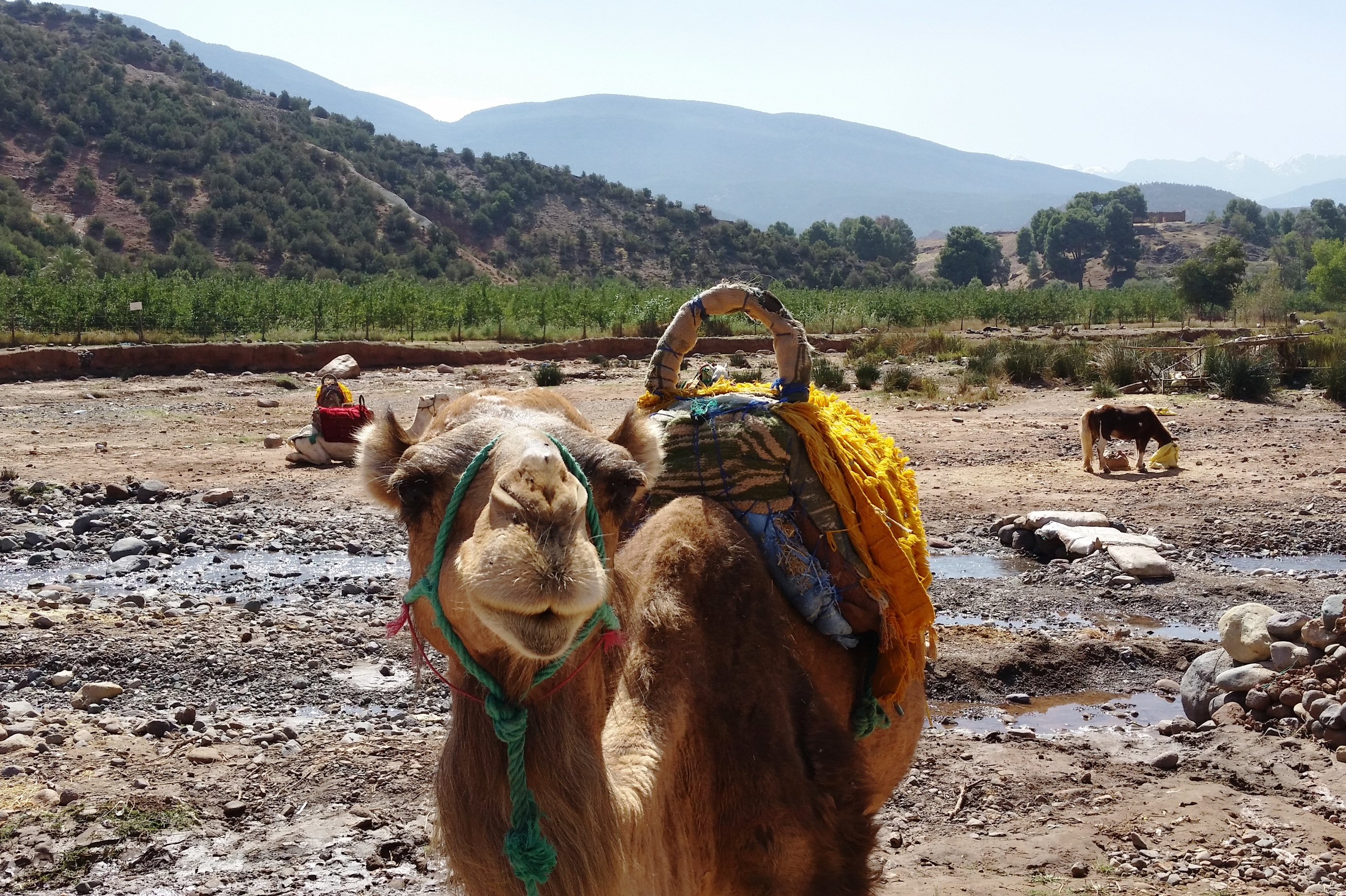Camel riding is popular
