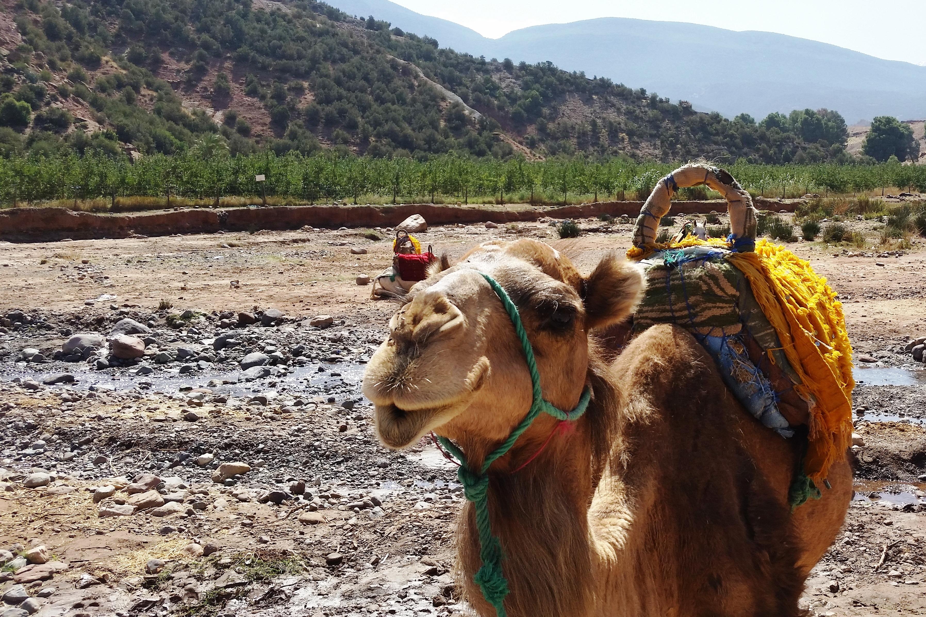 Atlas Camel Trail (5)